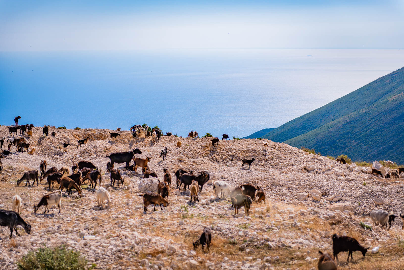 goats_llogara-1